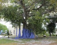 Image of large banyan tree at Tropical Ridge playground